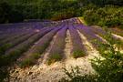 Provence 26