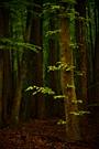 Frühlingswald III