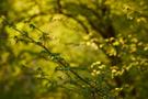 Frühlingswald IV