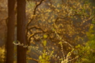 Frühlingswald V