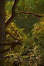 Frühlingswald VI