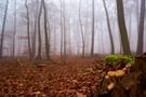 Im Nebel III