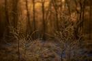 Geschwungene Zweige