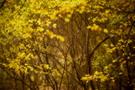 Herbstwald III