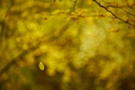 Herbstwald IV