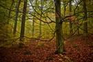 Wilder Baum