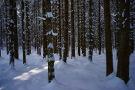 Schwarzwald 24
