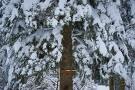 Schwarzwald 29