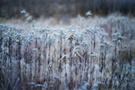 Winterwiese V