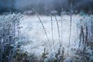 Winterwiese VII