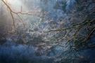 Eisige Zweige