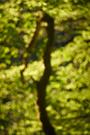 Waldlichter II