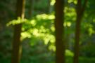 Waldlichter V