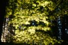 Waldlichter III