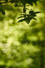 Waldlichter VI