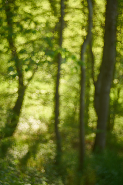 Waldlichter VII