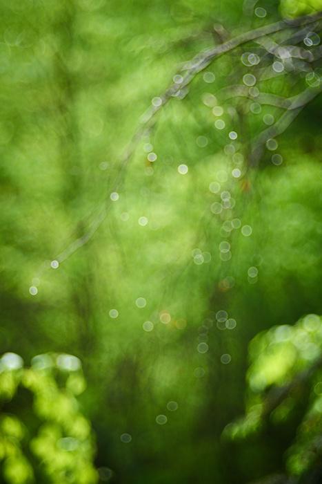 Waldlichter VIII