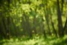 Waldlichter IX