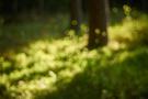 Waldlichter X