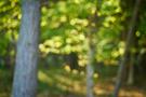 Waldlichter XI