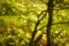 Waldlichter XII