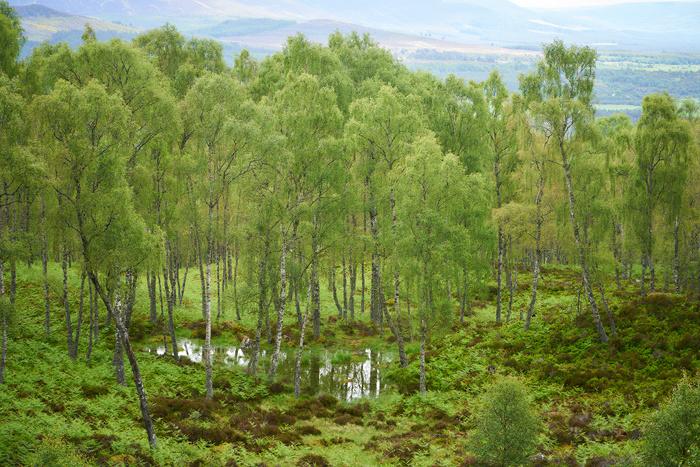 Schottland 70