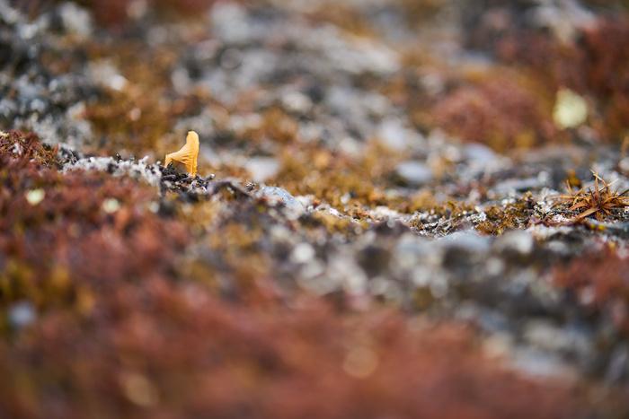 Spitzbergen 15