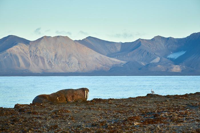 Spitzbergen 23