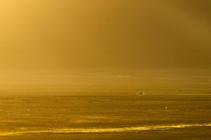 Spitzbergen 24