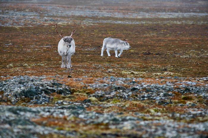Spitzbergen 65