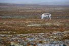 Spitzbergen 66