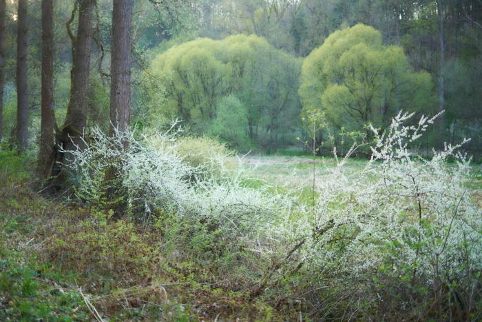 Frühlingswald II