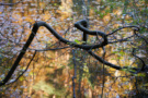 Herbstweiher