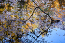 Herbstweiher II