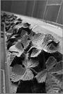 Steinerne Blätter