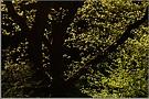 Blättermeer